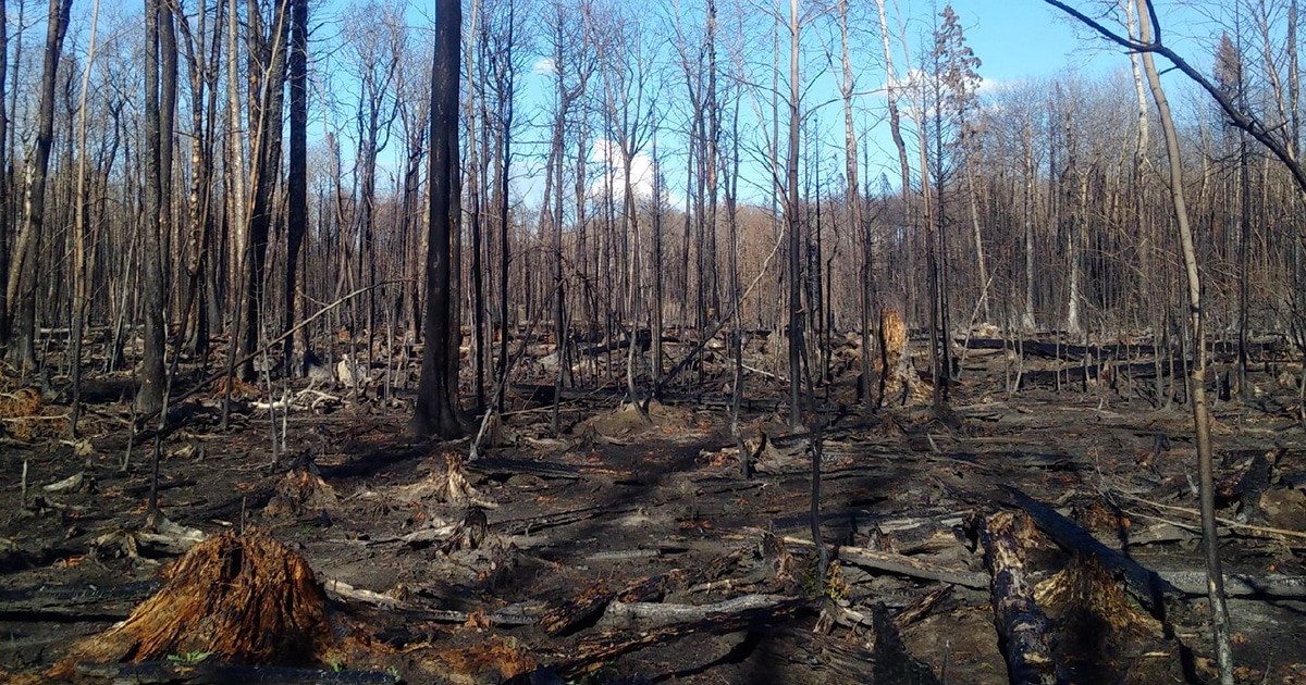 The aftermath of a recent fire is seen near the community of Montreal Lake in northern Saskatchewan. Submitted photo by Adam Halkett