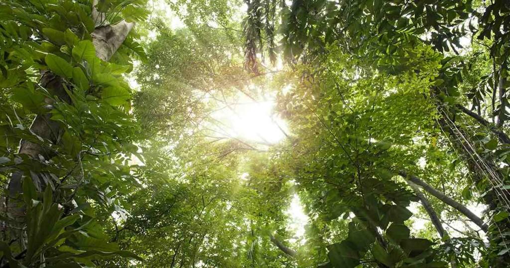 Trees. Photo: Shutterstock.