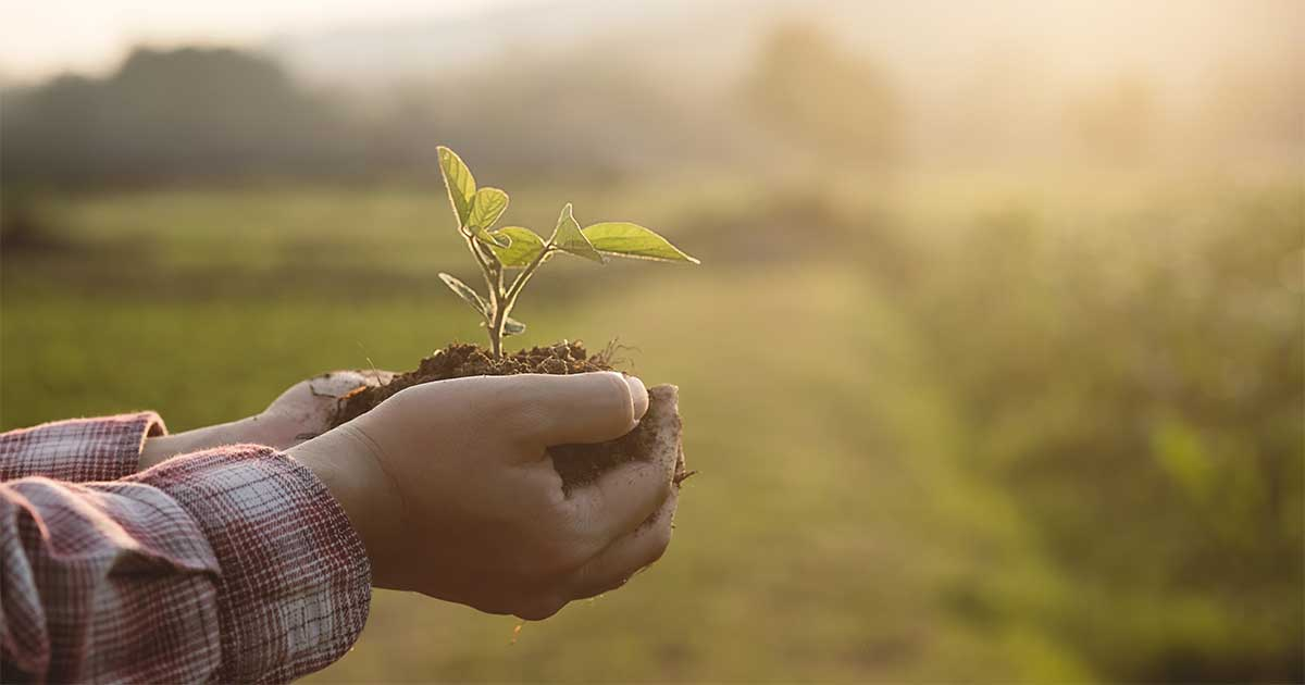Person holding a young plant in soil in front of a field